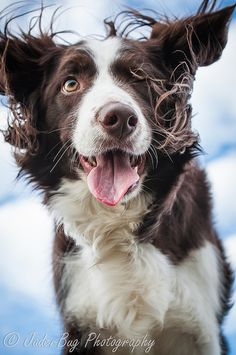 What makes your dog UNIQUE??