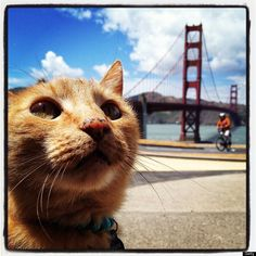 """This cat is the """"bomb""""    - Photo Bomb that is!"""