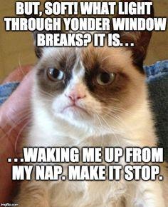 Shakespearean Grumpy Cat: Romeo & Juliet  Animal Shakespeare Memes