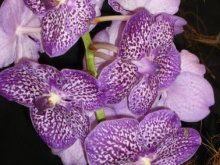La Orquídea | Cuidar de tus plantas es facilisimo.com