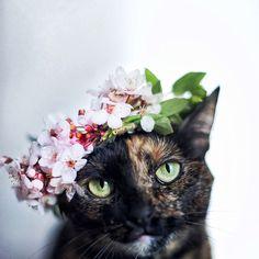 Elle photographie son chat au fil des saisons et crée une suite de clichés à couper le souffle