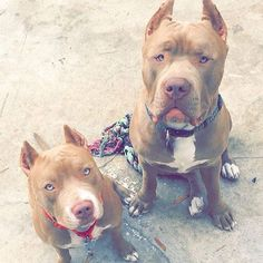 This is Nala & Diesel. They are brother and sister. Follow @furrypals_ for updates.