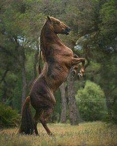 Musa Akkaya, Yılkı Atları