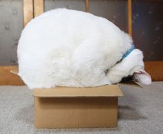 Cats like boxes even if  they don't fit.