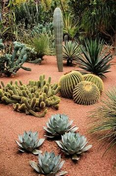 Jardines con plantas Suculentas