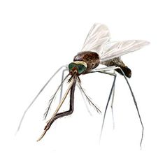 Mosquito-borne illnesses are on the rise in North America. Here's how to defend yourself. | From Organic Gardening