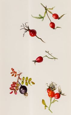 Rose hip seed oil can soothe the effects of eczema and psoriasis