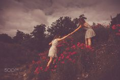 Identical twins Jesse and Layla Fraser Shot in a poppy field in Hampshire Identical Twins, Sister Friends, Hampshire, Poppies, Sisters, Rose, Garden, Painting, Art