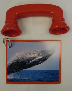 Sea Life Cards and Sound Phones (12 pieces) -- (55.4) two red sound phones, cards on ring: Whale, starfish, shark, sea lion, sea horse, lobster, jellyfish, dolphin, crab and fish