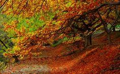 Обои парк, дорога, leaves, fall, листья, path, colors, trees, walk, осень, лес, park, forest, природа, деревья, ...