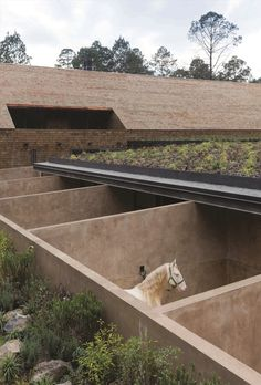 Highly commended AR_EA 2014: At the foot of a Mexican mountain, ashingle-clad barn and sunkenstables elegantly accommodate domestic and equestrian pursuits