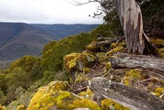 Barrington Tops: the bushwalker's national park - Australian Geographic Western Australia, Australia Travel, Barrington Tops, My Land, Countries Of The World, Mother Earth, Night Life, National Parks, City