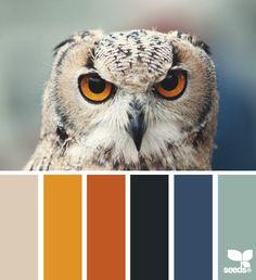 color stare - design seeds