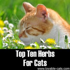 Top 10 Herbs For Cats►►http://lovable-cats.com/top-ten-herbs-for-cats/?i=p