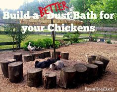 Build a BETTER Dust Bath for your Chickens