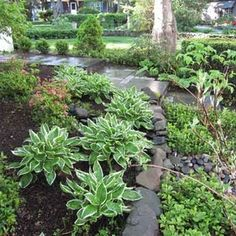 Traditional Landscape by Groundswell Designs