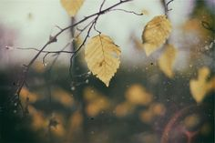 """Todays Pin from Creation7.com One of our copyright free images called """"Yellow Leaves"""". With a bright sun in the background, yet a yellow melancholy leaf stands alone. With fresh rain spots, and spider webs to match; the picture shows of the ecosystem that we live in, the beauty that we can find in the everyday parts of the world around us, and the sadness that comes with it. Download this High Resolution Image for FREE at Creation7.com"""