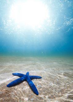 Starfish deep underwater by Novikov Sergey, via 500px