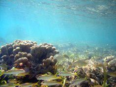onderwater bodem - Google zoeken