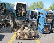 Chicago group hits the trail to educate about puppy mills. #examinercom