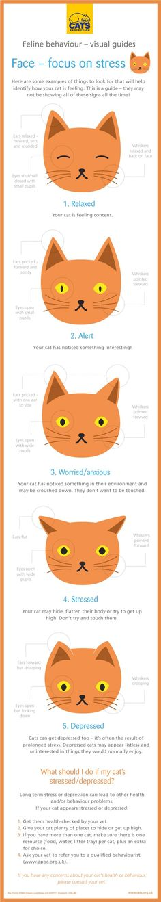 Recognising stress in your cat's face