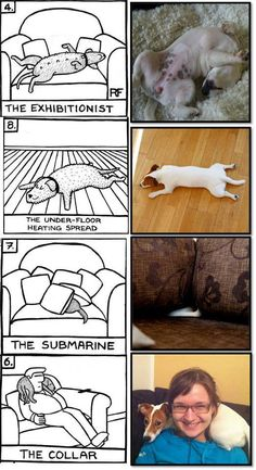 Sleeping positions Annamari Henno from Finland has compiled a fantastic collection of pictures of Penny the Jack Russell Terrier showing off her sleeping positions