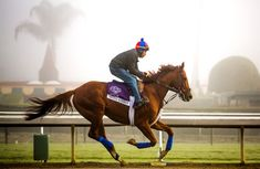 This year, the 2011 Kentucky Derby and 2013 Dubai World Cup hero, Animal Kingdom, hopes to add his name to the roster of brilliant Thoroughbreds that have captured the Queen Anne, a list that includes not only Frankel, but also three-time Breeders' Cup Mile victress Goldikova.