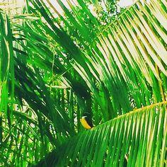 My View Of World — Amazonia