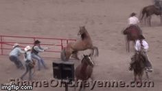 Why don`t we share love instead of hate?-Horse Abuse