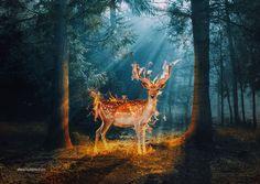 The Deer by hotamr.deviantart.com on @deviantART