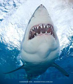 Rodney Fox Great White Shark Expeditions via Facebook.