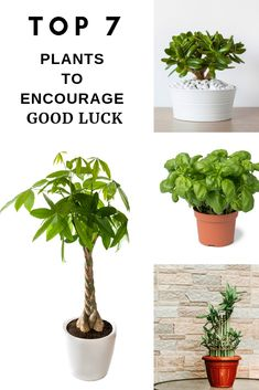 Small gardens are an excellent way to bring the outdoors inside. Miniature plants are more than just dwarf varieties or bonsai specimens. Fairy Garden Plants, Fairy Gardens, Ti Plant, Lucky Plant, Succulent Gardening, Container Gardening, Gardening Tips, Basil Plant, House Plants Decor