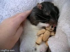"""""""Do not underestimate the importance of snuggling."""" 