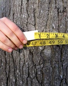Try this simple activity with your child to guesstimate the age of a tree in your yard and nurture her developing math skills while you're at it!
