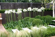Modern planting, green and white scheme, black backdrop, decking