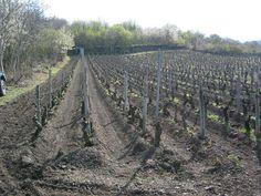 Pierre Beauger, vigneron nature à côté du Gite de Montaigut Le Blanc - Puy de Dôme (Auvergne) - vins natures