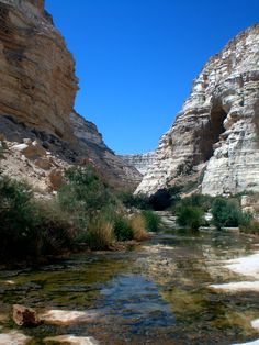 An Oasis in the Middle of the Negev Desert, Israel.