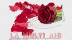 Roses for kitten Pearl Wallpaper, Background Images Wallpapers, Desktop Wallpapers, Pearl And Lace, Happy Anniversary, Red Roses, Presents, Google, Kitten