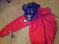 DIY No-Sew Dog Coat
