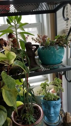 Plant Obsessions