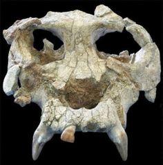 Tras expandirse por África, los hominoideos empezaron a dispersarse por Eurasia hace 14 millones de años, donde se diversificaron dando luga...