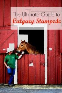 The ultimate guide to Calgary Stampede. Check out all the must-see and must-do at this cowboy festival!