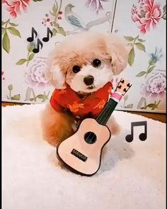 Most of the furry friends are music lovers..... Cute Baby Dogs, Cute Funny Dogs, Cute Dogs And Puppies, Cute Funny Animals, Cute Baby Animals, Funny Cats, Cute Babies, Baby Animals Pictures, Funny Animal Pictures
