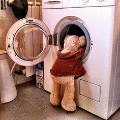 Bear and the washing machine