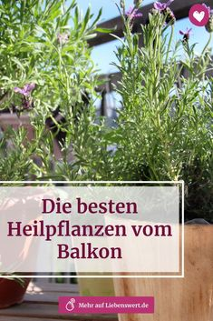 Die besten Heilpflanzen vom Balkon From cold to pain: which common complaints you can cure with medicinal plants, the gentle remedies from the windowsill, you [. Winter Hairstyles, Kraut, About Me Blog, Plants, Mystic, Gardening, Goals, Nice, Medicinal Plants
