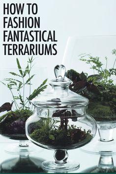 Ken Marten on How To Fashion Fantastical Terrariums |