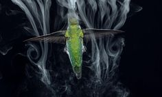 hummingbirds in slow motion reveal an unprecedented look at their lives