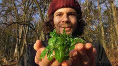 Saftiges Grün und ein Korb voller Winterpilze - Pilze und Wildkräuter sa...