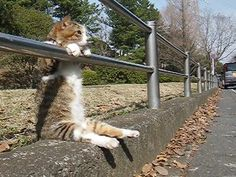 Jut sitting here chilling, waiting for someone to pass by and pet me. Waiting, hmm still waiting. Hello any one around? Hello! Cool Cats, Animals And Pets, Funny Animals, Cute Animals, Silly Cats, Crazy Cats, Funny Cats, Nice View, Kittens Cutest