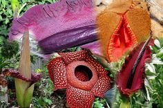 4 The World's Most Unusual Plants